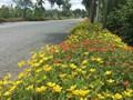 Chống xả rác, nhiều đường hoa đẹp xuất hiện ở Bình Chánh