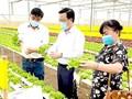 TPHCM - Lâm Đồng liên kết chuẩn bị rau, hoa cung ứng tết