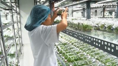 Đưa nông nghiệp công nghệ cao trở thành lợi thế cạnh tranh của kinh tế TP. Hồ Chí Minh