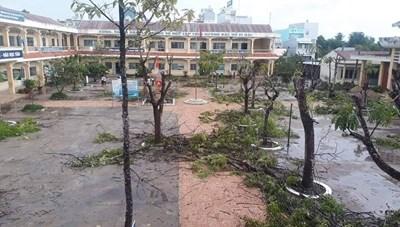 Đừng ồ ạt chặt bỏ cây xanh trong sân trường