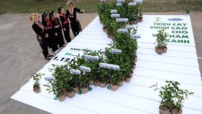 Hơn 1 triệu cây xanh đã được trồng tại 20 tỉnh thành trong năm 2020