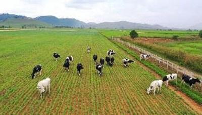 Quý 1/2022: Tổ hợp Trang trại bò sữa của Vinamilk tại Lào sẽ đi vào hoạt động