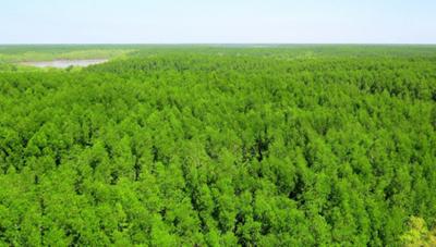 Kết luận thanh tra về Rừng phòng hộ huyện Cần Giờ