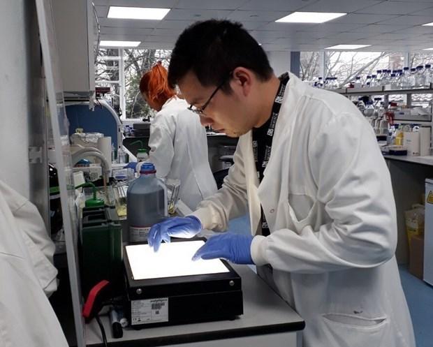 Thạc sỹ Mạc Văn Trọng đang phân tích kết quả biểu hiện gene S của COVID-19 tại Phòng thí nghiệm Viện Sinh-Hóa, Trường Đại học Bristol (Anh). (Nguồn: Vietnam+)