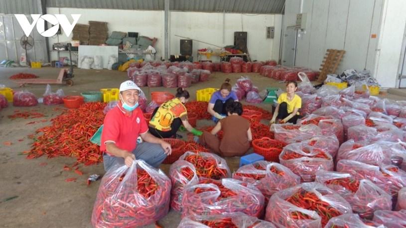 Nông dân các tỉnh gửi nông sản cho người dân TP.HCM.