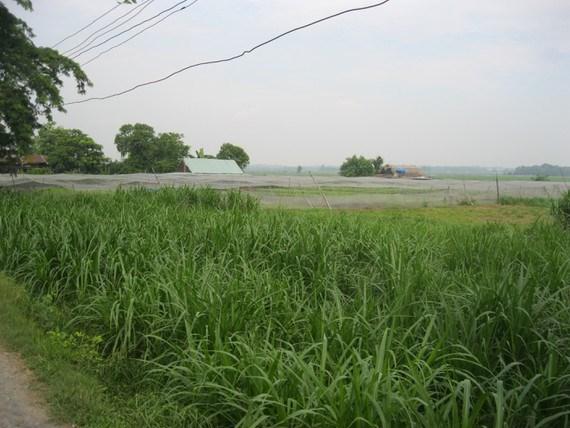 Năm 2021, huyện Bình Chánh sẽ được chuyển tổng cộng gần 1.350 hecta từ đất nông nghiệp sang đất phi nông nghiệp.