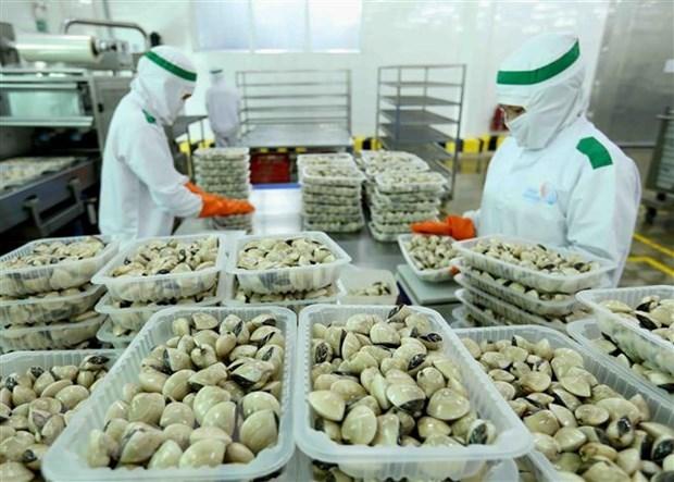 Chế biến ngao tại Công ty Lenger Việt Nam (Lenger Seafoods Vietnam) xuất khẩu sang EU, Anh, Nhật Bản, Mỹ, Hàn Quốc (14/10/2019). (Ảnh: TTXVN)