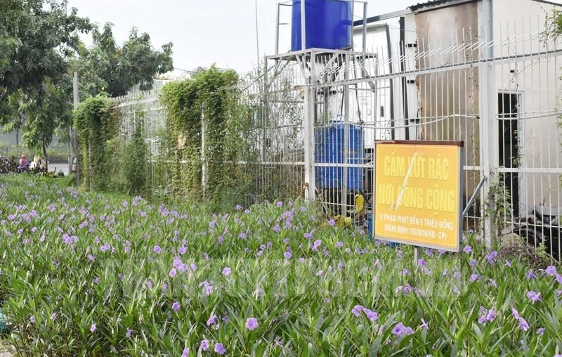 Trồng hoa tại các khoảng đất trống ven đường nối Tỉnh lộ 43 với quốc lộ 1A, phường Tam Bình, quận Thủ Đức.