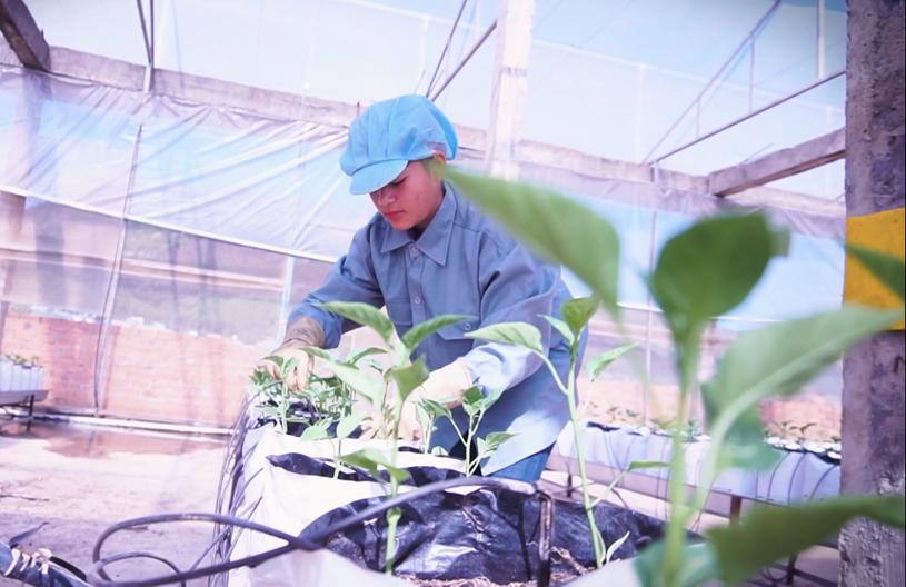 TPHCM thí điểm thu hút cán bộ trẻ về làm việc tại các hợp tác xã nông nghiệp. Ảnh: A.P